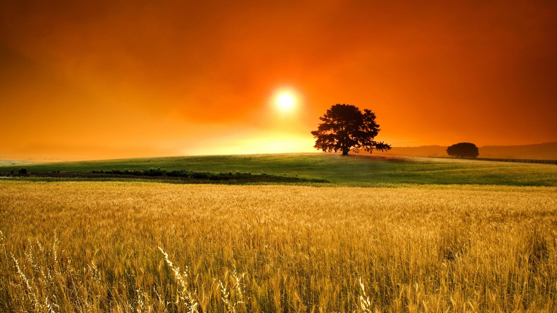 wheat-field-hd-wallpaper-509542